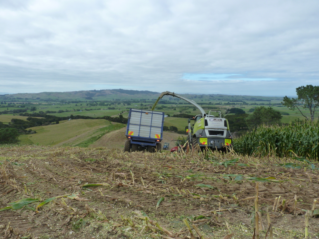 Maize chopping by Jackson Contracting, Waikato Agricultural Contracting